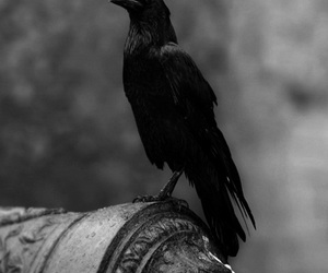 bird, black, and gsayour image