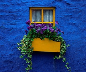 window, blue, and flowers image