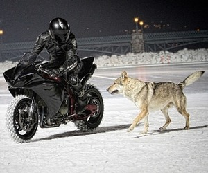 dog, sex, and wolf image