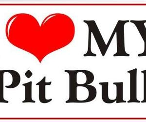 dogs, pit bulls, and love image