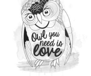 cool, drawing, and owl image