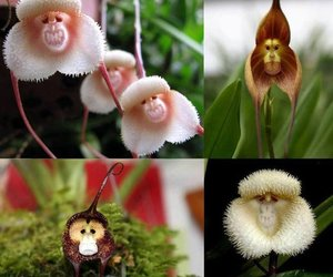 flowers, monkey, and orchid image