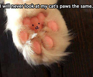 cat, paws, and cute image