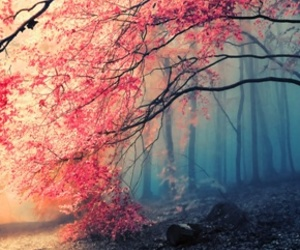 pink, red, and tree image