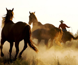 horse, cowboy, and animal image