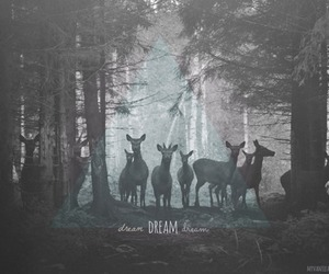 black&white, deer, and quotes image