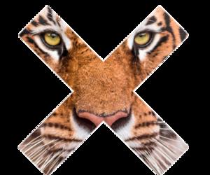 tiger, x, and animal image