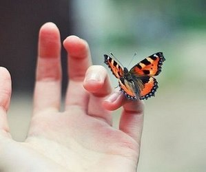 butterfly, vintage, and indie image