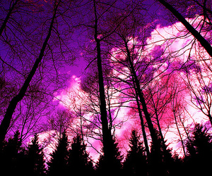 pink, tree, and purple image