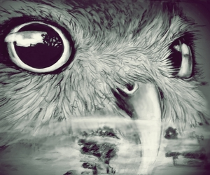 black&white, drawing, and owl image