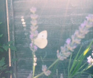 butterfly, lavender, and grass image