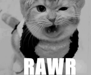 cat, rawr, and animal image
