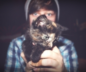 cat, boy, and cute image