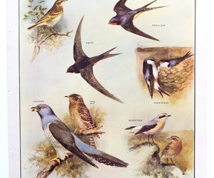 vintage, educational chart, and bird poster image
