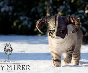 cat, funny, and skyrim image