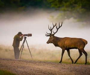 animal, deer, and photographer image
