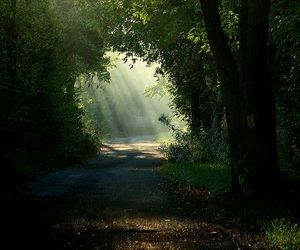 forest, magic, and nature image
