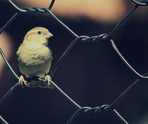 bird, animal, and fence image