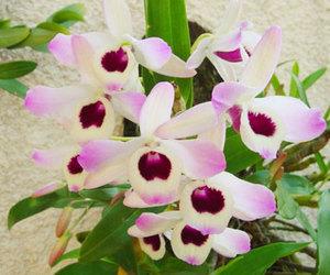 asia, orchids, and orquidea image
