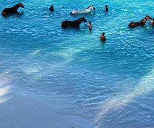 fun, ocean, and horses image