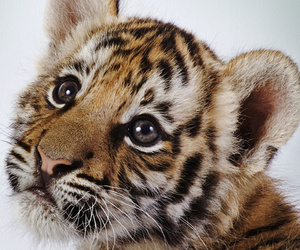 cub, cute, and beautiful image