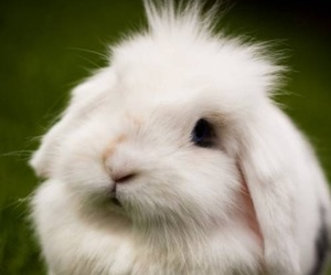 fluffy and white image