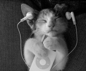 adorable, cat, and music image