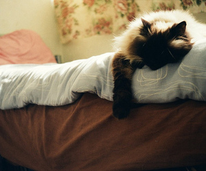 35mm, film, and kitty image