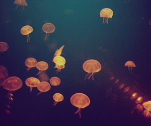 jellyfish, light, and sea image