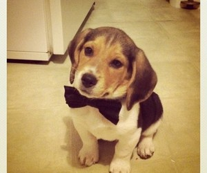 bow tie and puppy image