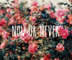 flowers, now, and never image