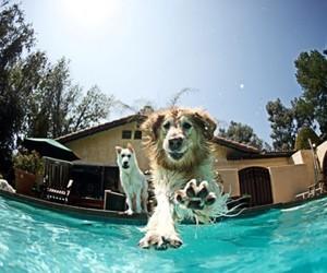 dog, animal, and pool image