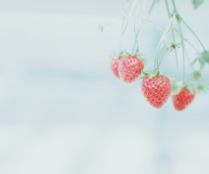 strawberry and cute image