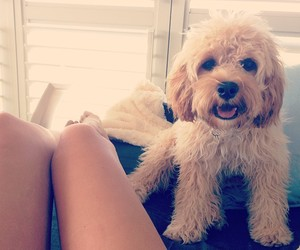 dog, cute, and legs image