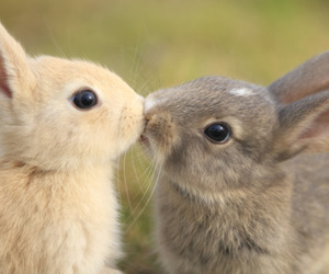 bunny, kiss, and rabbit image