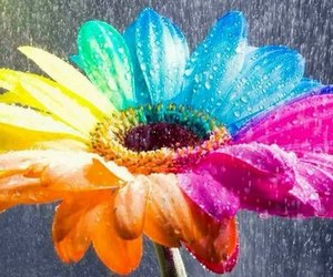 flowers, rainbow, and colors image