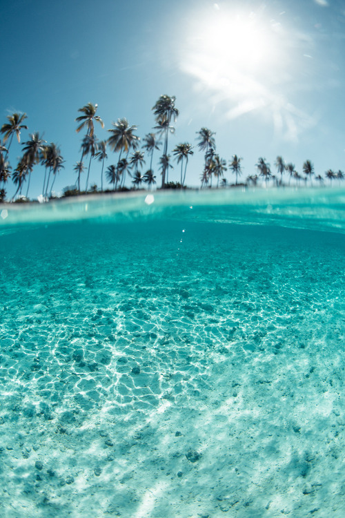 palms, vacation, and crystal clear image