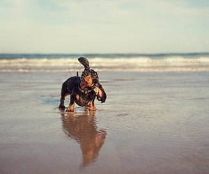 adorable, back and forth, and beach image