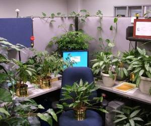 plants, awesome, and computer image