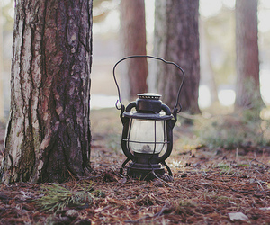 lamp, tree, and forest image