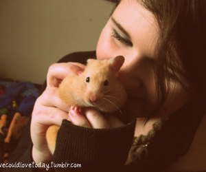 hampster and cute image