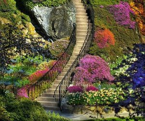 design, nature, and flowers image