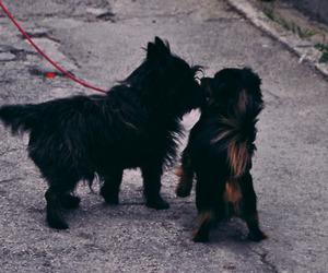 cool, couple, and dog image