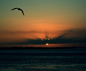sunset, bird, and beautiful image