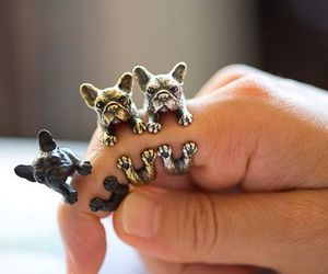 dog, ring, and rings image