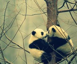 panda, love, and kiss image