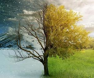 summer, tree, and winter image