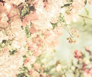 beautiful, bloom, and blossom image