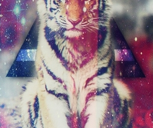 colores, felinos, and hipster image