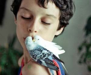 bird, curls, and boy image